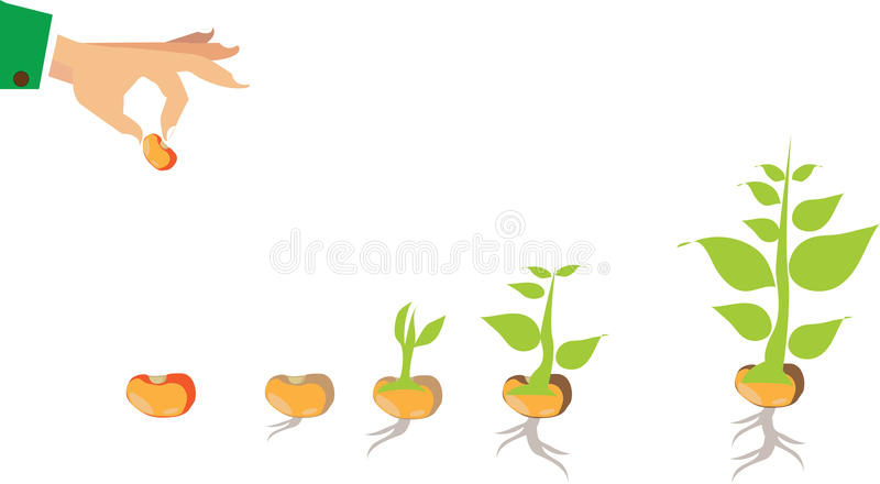Stages of growth of plant and seed to tree royalty free illustration