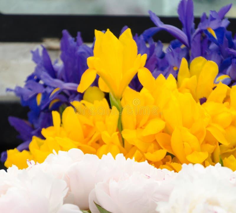 Stagione del fiore dell'iride al mercato dell'agricoltore di Redmond fotografia stock