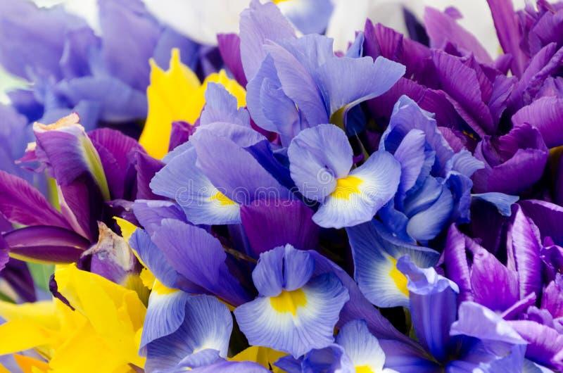 Stagione del fiore dell'iride al mercato dell'agricoltore di Redmond immagine stock libera da diritti