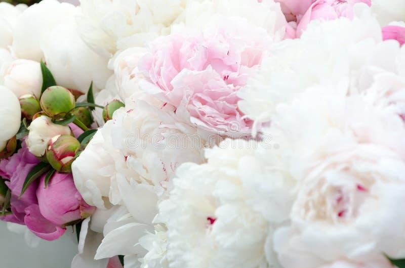 Stagione del fiore della peonia al mercato dell'agricoltore di Redmond fotografia stock