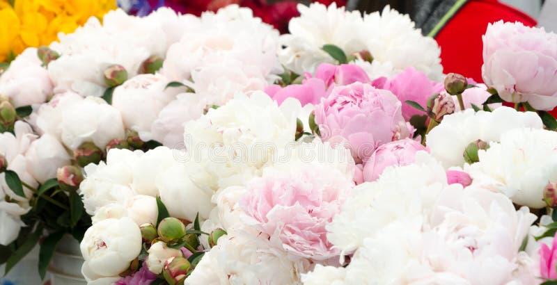 Stagione del fiore della peonia al mercato dell'agricoltore di Redmond immagine stock