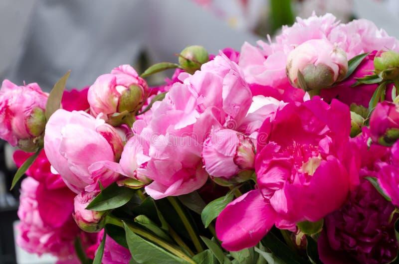 Stagione del fiore della peonia al mercato dell'agricoltore di Redmond fotografie stock