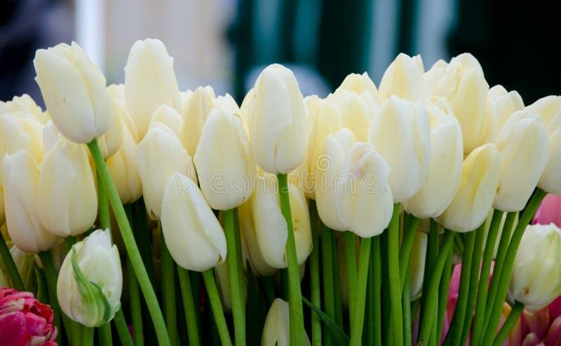 Stagione del fiore della primavera al mercato dell'agricoltore di Redmond fotografia stock libera da diritti