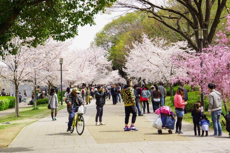 Stagione del fiore di ciliegia del ` s del Giappone immagini stock
