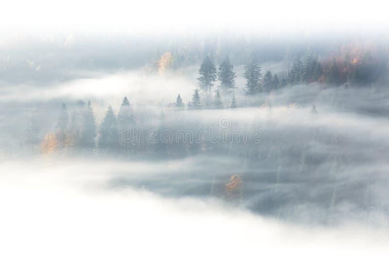Stagione di autunno, foresta selvaggia in nebbia di alba e nuvole fotografia stock libera da diritti