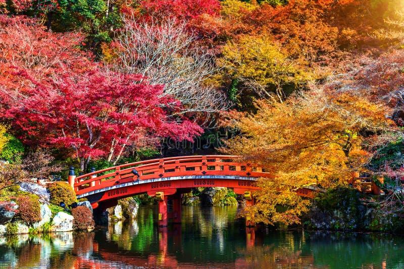 Stagione di autunno nel Giappone, bello parco di autunno immagini stock