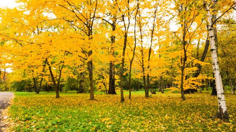 Stagione di autunno nella città fotografia stock