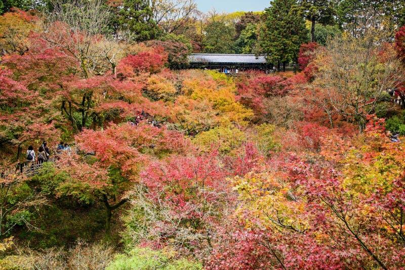 Stagione di autunno a Tofukuji, Kyoto fotografia stock libera da diritti