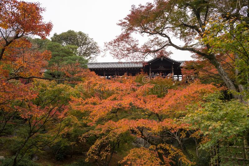 Stagione di autunno a Tofukuji Kyoto Giappone fotografia stock libera da diritti