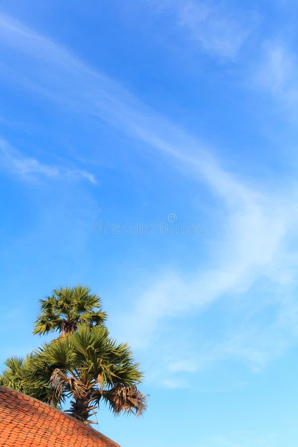 Stagione di estate, cocco tropicale della palma il giorno soleggiato luminoso con il fondo variopinto del cloudscape e del cielo  immagini stock