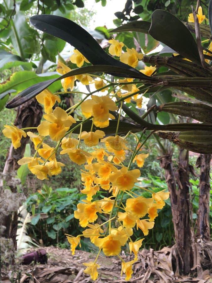 stagione di fioritura dell'orchidea fotografia stock libera da diritti