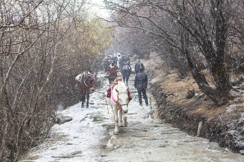 Stagione invernale di stupore alla riserva naturale di Yading in Sichuan, la Cina fotografie stock libere da diritti