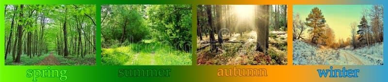 stagioni fotografie stock libere da diritti