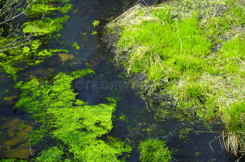 Download Stagnant Creek stock image. Image of water, pond, grass - 108747