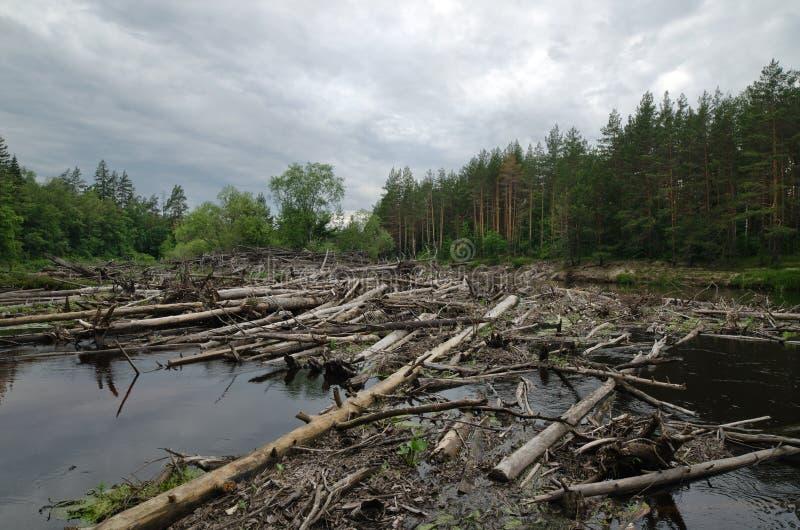 Stagnatie op de Lukh-rivier (Rusland) stock foto's