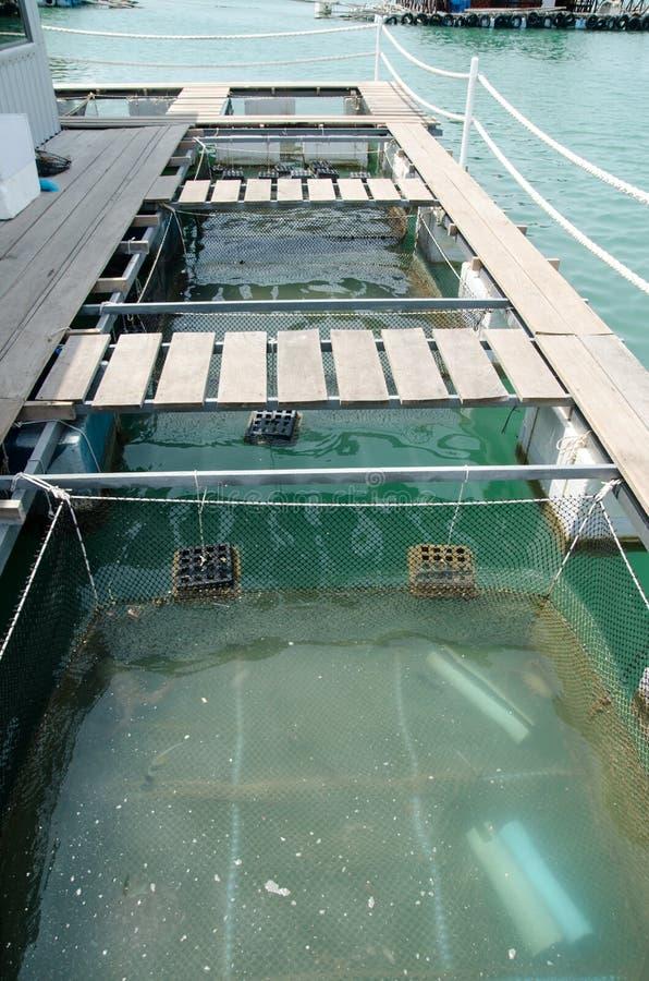Stagni di pesci di acquicoltura nel mezzo di acqua immagine stock