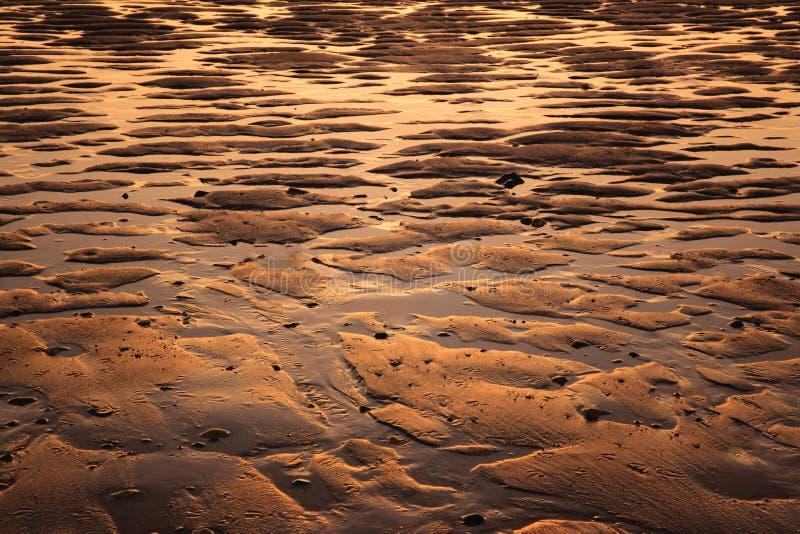 Stagni dorati della spiaggia fotografia stock libera da diritti