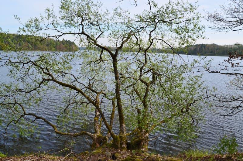 Stagni nella campagna, stagno di Kaclezsky della Boemia del sud fotografie stock