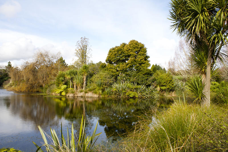 Stagno al giardino botanico di Auckland fotografie stock libere da diritti