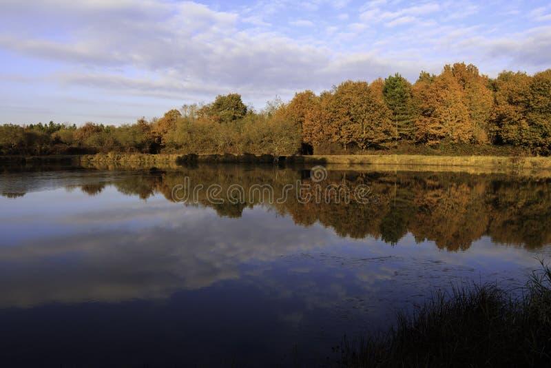 Stagno in autunno con alba sopra fondo di acqua congelata, colori degli alberi a novembre con cielo blu e nuvola immagini stock