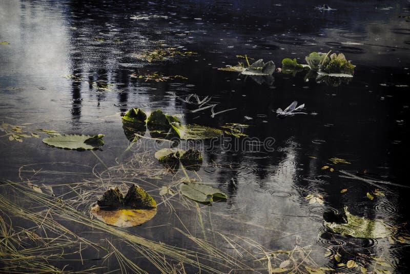 Stagno con la pioggia di estate immagini stock libere da diritti