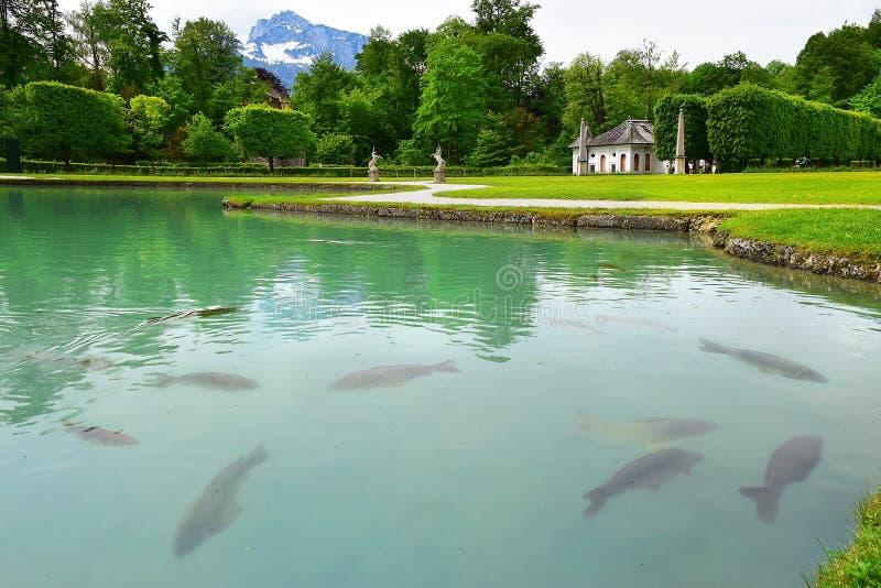 Stagno con le carpe nel parco del palazzo di Hellbrunn, Salisburgo fotografia stock