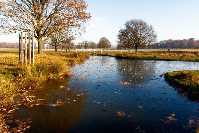Stagno congelato in Richmond Park immagine stock
