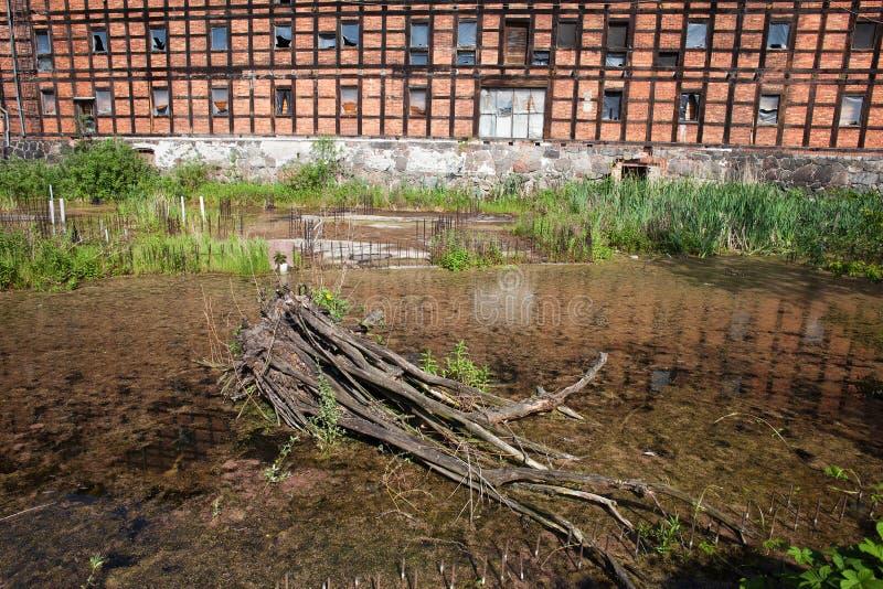 Download Stagno Dell'isola Del Mulino In Bydgoszcz Fotografia Stock - Immagine di albero, tronco: 55361816