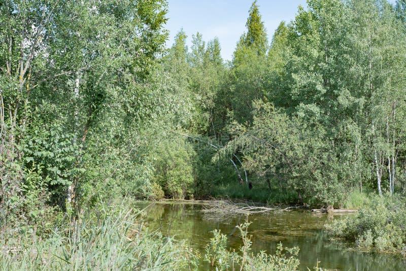 Stagno della foresta intorno a qui da pescare acqua e cielo, bellezza! immagine stock libera da diritti