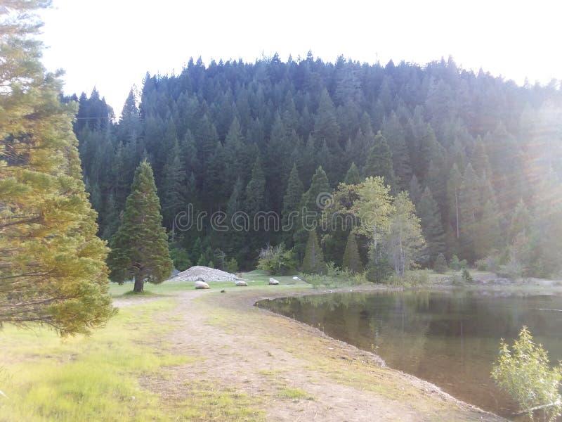 Stagno delle montagne degli alberi della valle fotografie stock