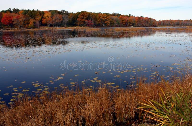 Stagno di autunno immagine stock