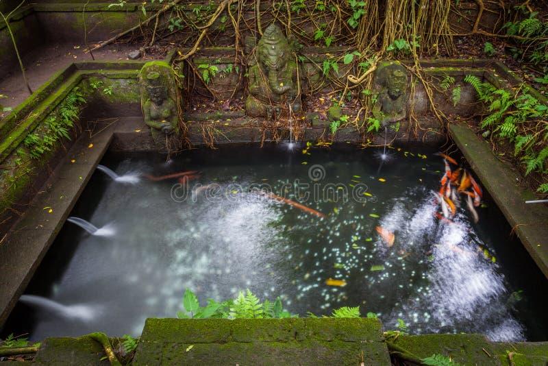 Stagno di bagno nel tempio santo della primavera, scimmia sacra Forest Sanctuary, Ubud, Bali fotografie stock