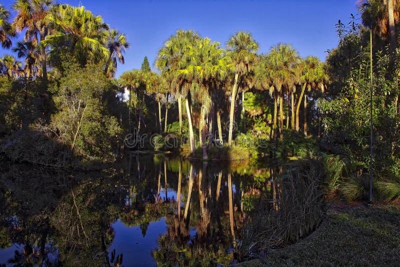 Stagno di Florida, area del giardino fotografia stock