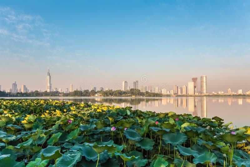 Stagno di Lotus e città moderna immagini stock