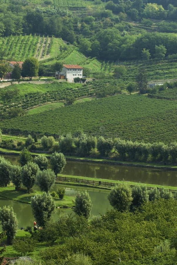 Stagno di pesca italiano? nel paese di vino immagini stock
