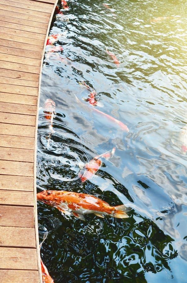 Stagno di pesce di Koi immagini stock