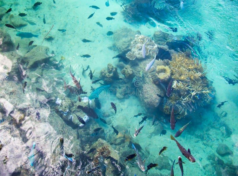 Stagno di pesce tropicale all'hotel intercontinentale della stazione termale e della località di soggiorno a Papeete, Tahiti, Pol fotografia stock