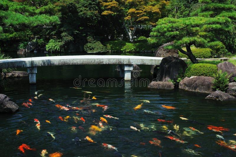 Stagno di pesci al giardino giapponese fotografia stock for Pesci da stagno