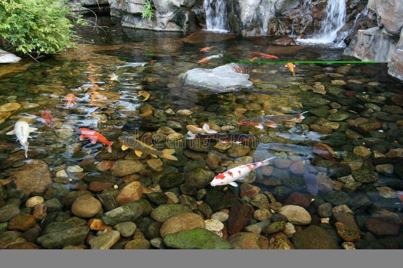 Stagno di pesci giapponese di Koi fotografia stock