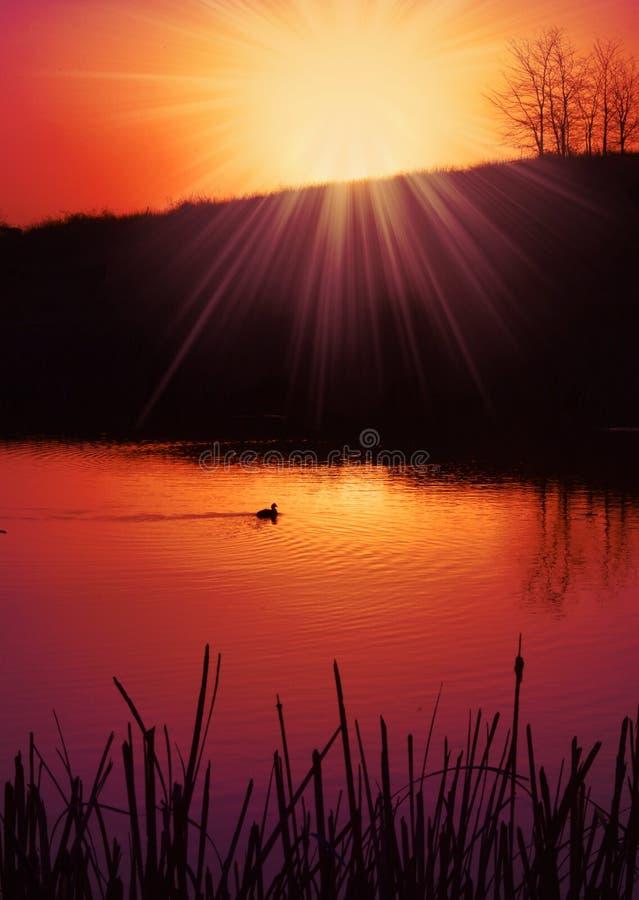 Stagno di tramonto immagini stock libere da diritti