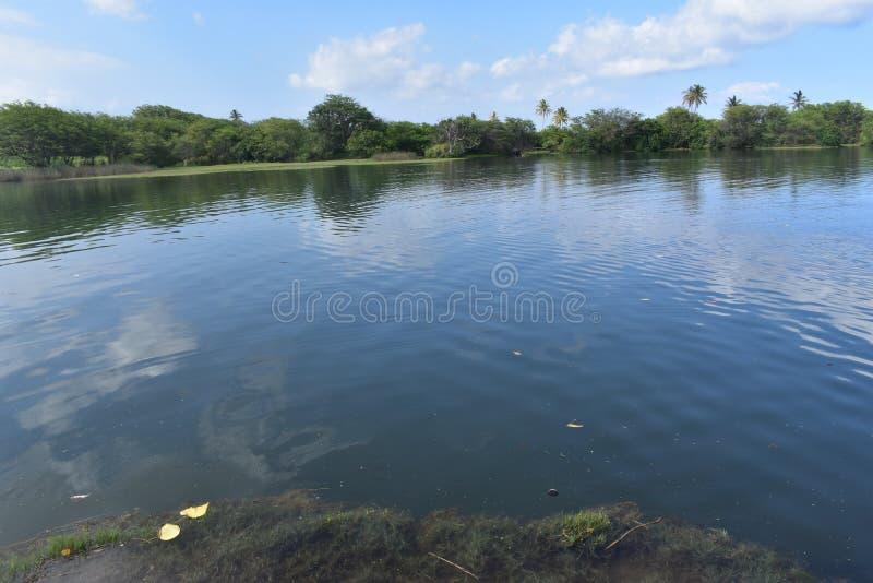 Stagno e fiume pacifici in mezzo di una foresta pluviale tropicale fotografia stock libera da diritti