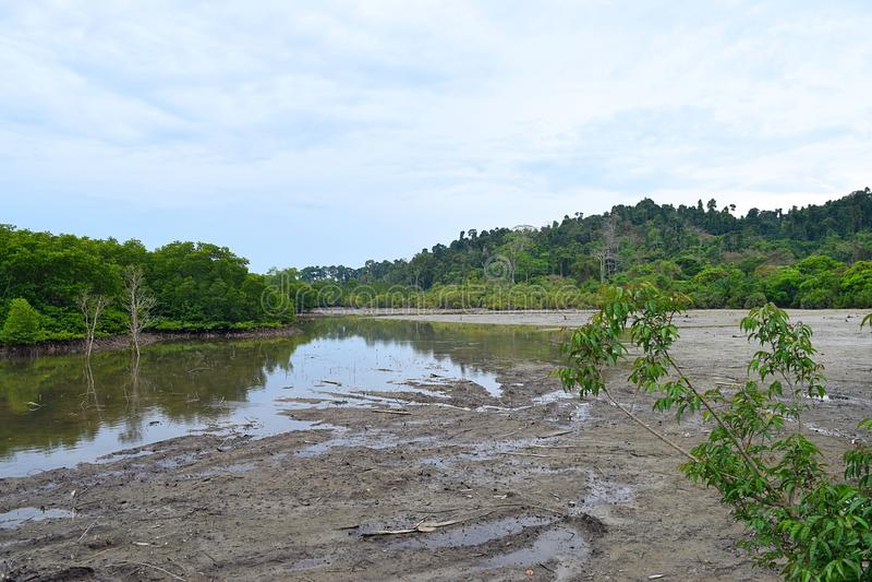 Stagno, foresta della mangrovia e chiaro cielo blu - isola di Baratang, andamane Nicobar, India fotografie stock