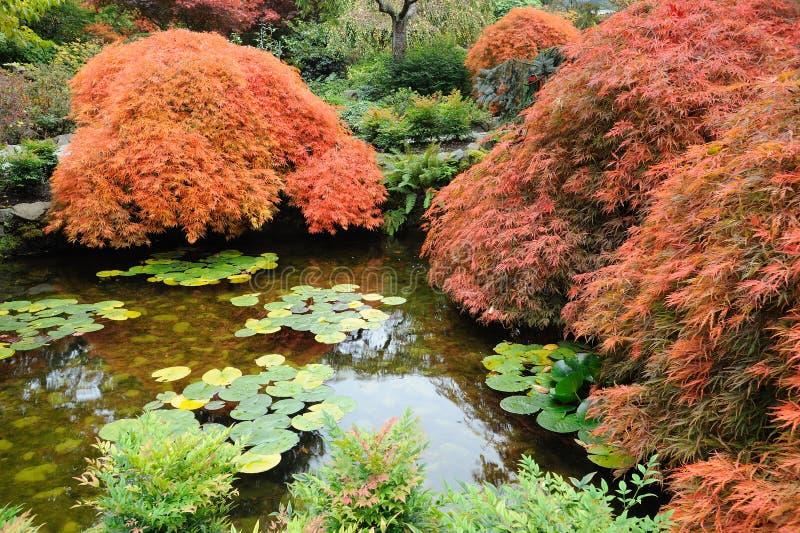 Stagno giapponese del giardino immagine stock