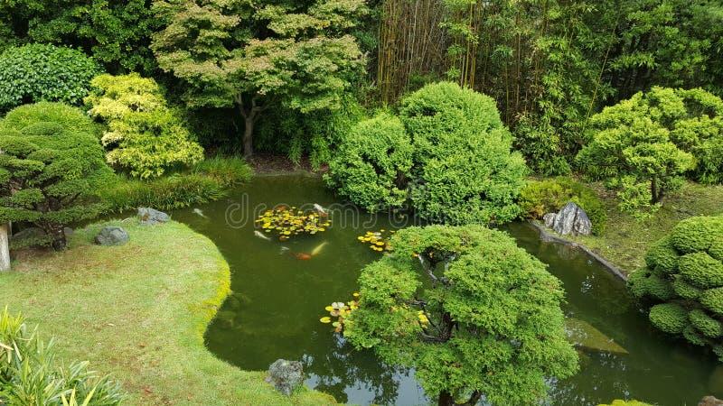 Stagno giapponese del giardino di tè fotografie stock