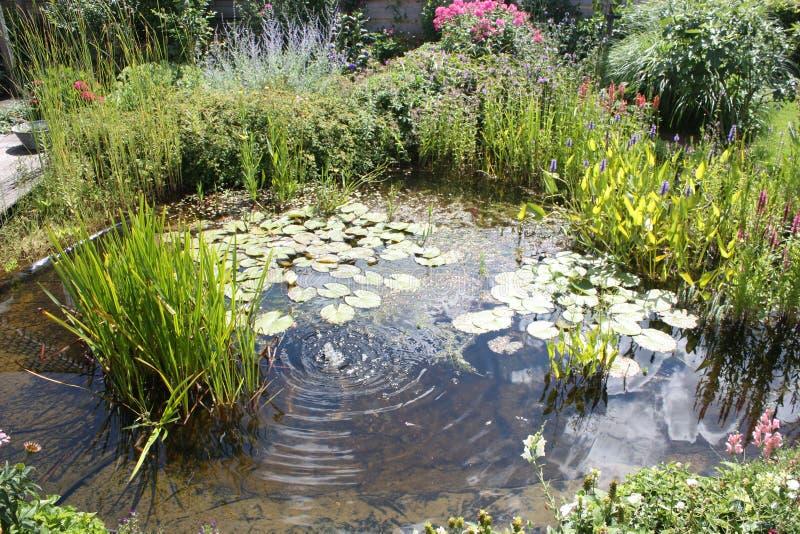 Stagno naturale del cortile con le piante acquatiche e la piccola fontana fotografie stock