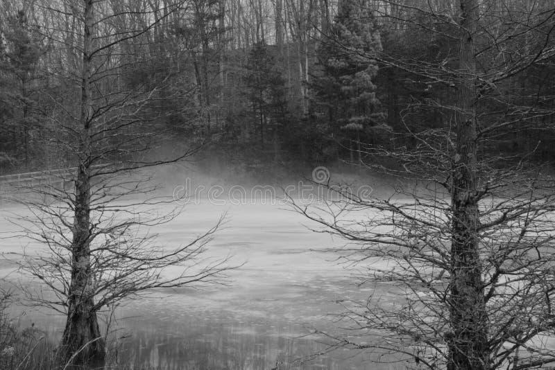 Stagno nebbioso in bianco e nero fotografia stock