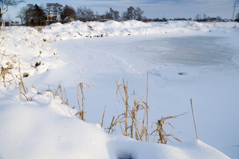 Stagno nel giorno di inverno fotografia stock libera da diritti