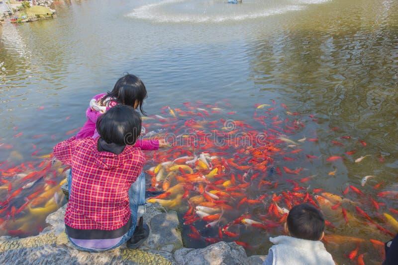 Stagno nel parco per guardare il bambino del pesce rosso fotografie stock