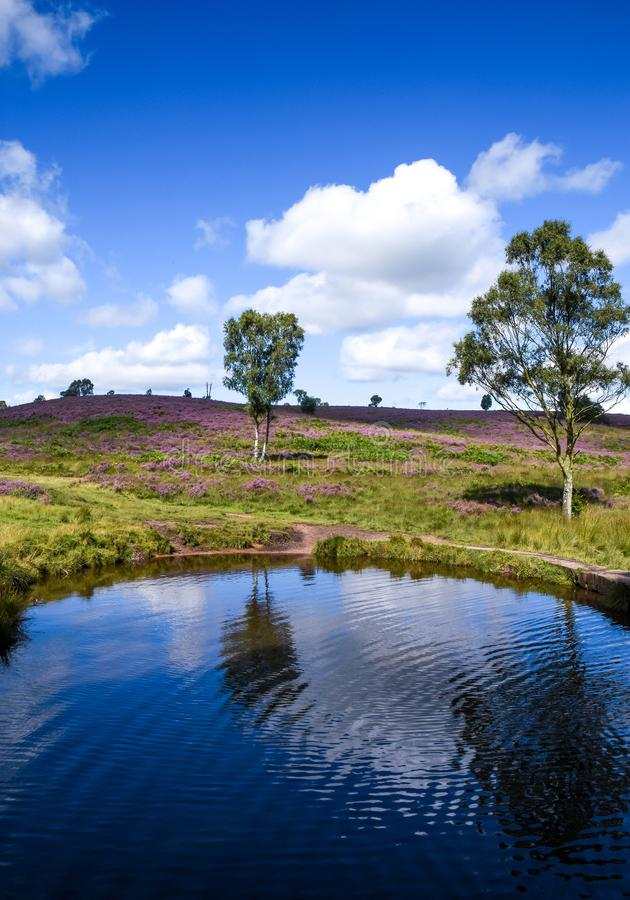 Stagno nell'area di inseguimento di Cannock di bellezza naturale eccezionale fotografie stock libere da diritti