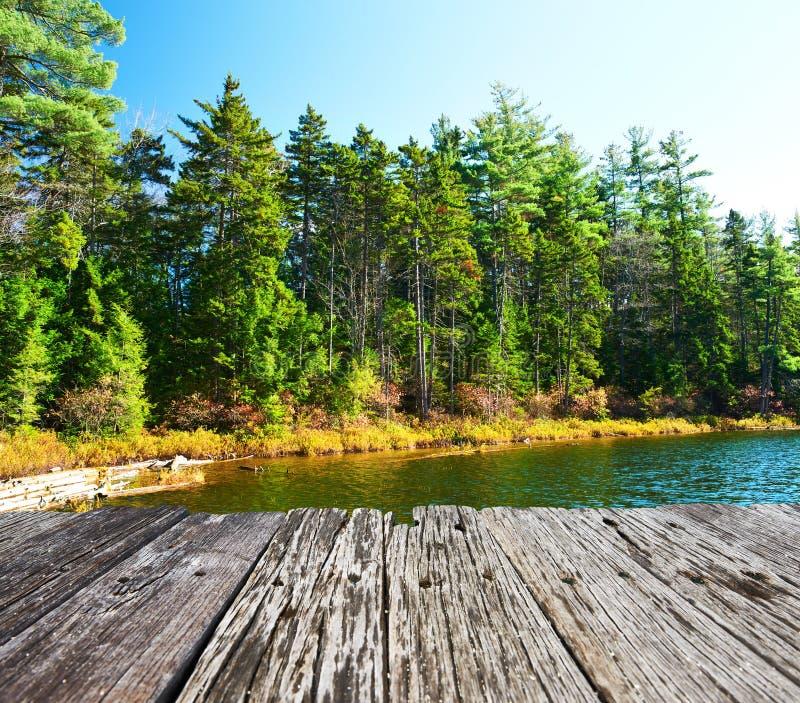 Stagno nella foresta nazionale della montagna bianca, New Hampshire fotografie stock libere da diritti